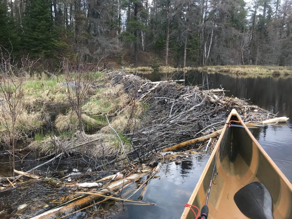 monday funday piragis paddle solo cane beaver dam